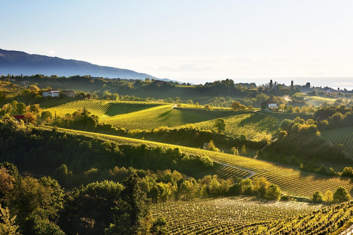 Vacanza enogastronomica in Veneto - Degustazione di Prosecco Superiore delle migliori cantine venete e dei migliori vini veneti