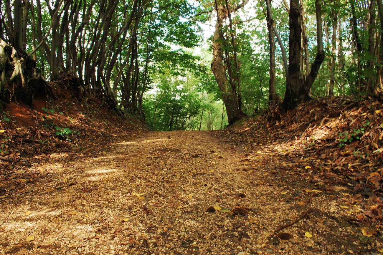 Itinerari a piedi nelle grotte del Montello e itinerari in bici tra le Colline del Prosecco in Veneto