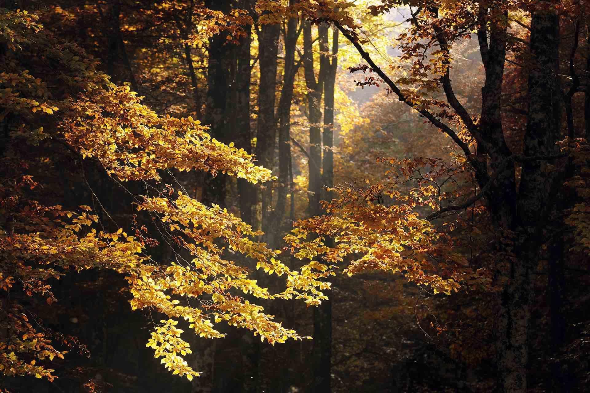 Scopri il bramito del cervo nella Foresta del Cansiglio sull'Altopiano del Cansiglio in Veneto