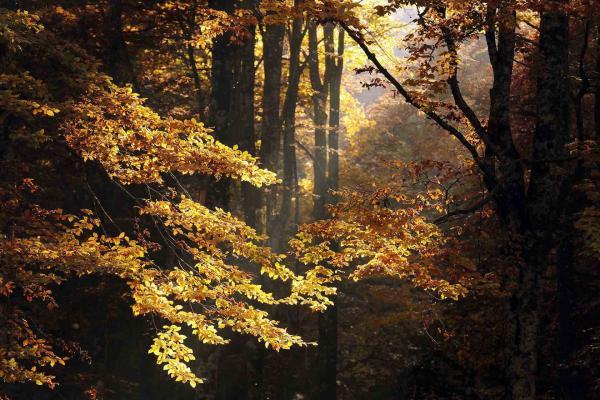 La Foresta del Cansiglio,  un assaggio di vacanza natura in Veneto